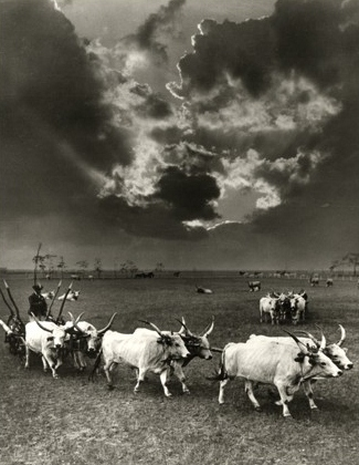 Six Cattle, Hortobágy, 1930 by Rudolf Balogh