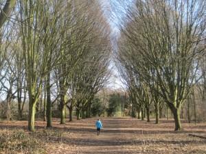 Bushey Park