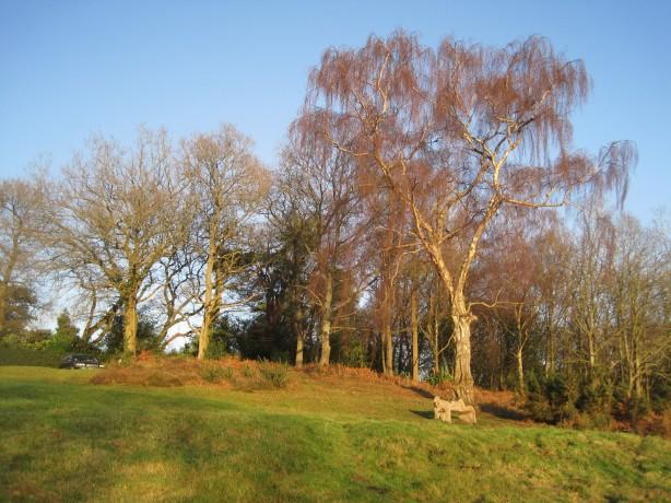 Late afternoon sunlight in Sandhills