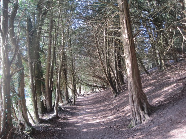 Path at the foot of Colley Hill
