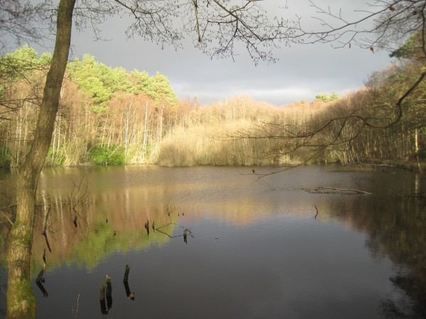 The General's Pond, Puttenham Common