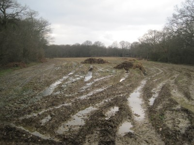 A muddy field near Capel in Surrey