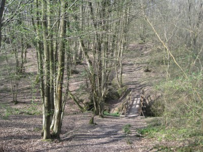 Steps down to the bridge over Welland Gill in Mount Noddy Wood