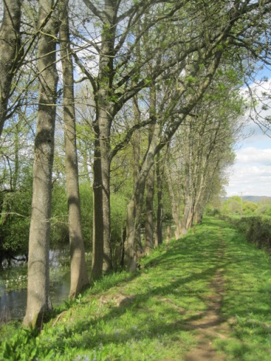 footpath beside the Wey and Arun canal