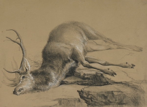 A Dead Stag by Edwin Landseer. Black and white chalk on paper © National Galleries of Scotland